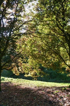 back light trees landscape
