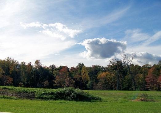 back yard fall trees