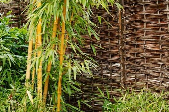 background bamboo botanical