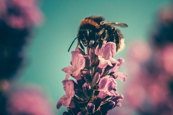 background beautiful blossom blur bright closeup