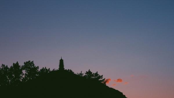 background beautiful dawn evening forest landscape