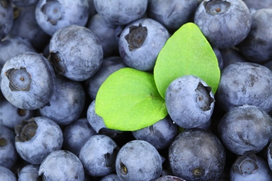 background berry blue