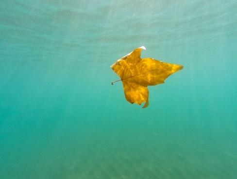 background biology blur daytime diving fish holiday