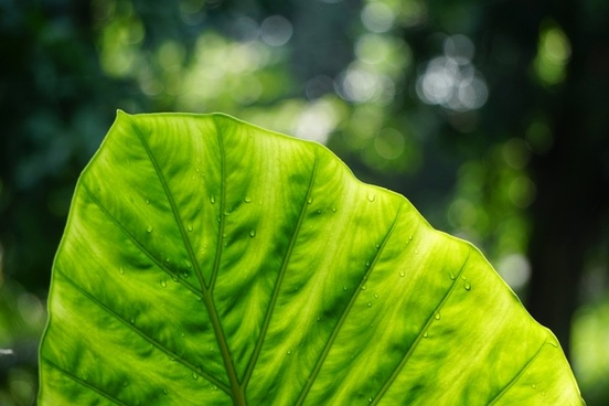 background biology botany color dof foliage forest