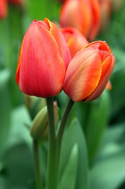 background bloom blooming