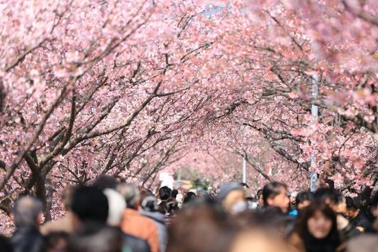 background blossom branch cherry closeup color