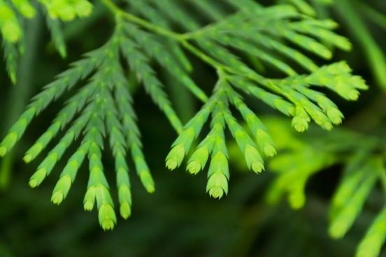 background blur branch
