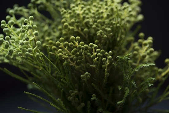 background blur closeup color food forest garden