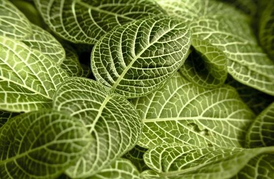 background botany bright closeup detail ecology