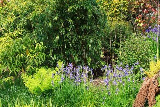 background botany color