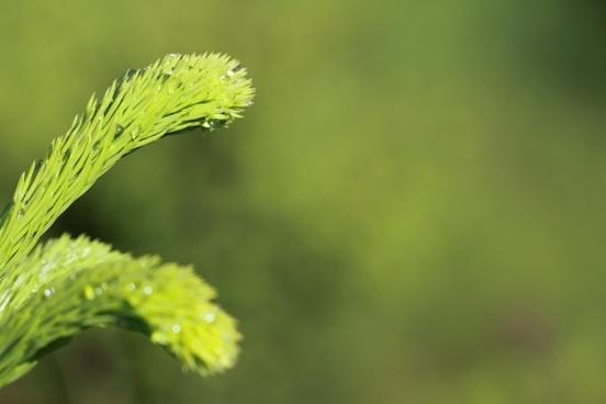 background branch closeup