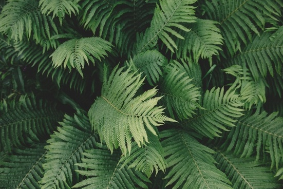 background branch color delicate fern foliage forest