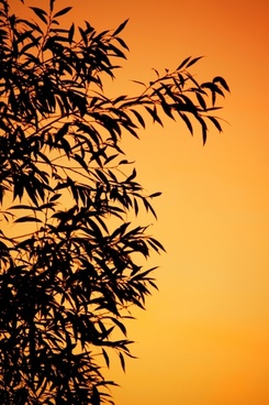 background branch dusk