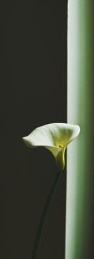 background bud color colour delicate flor flora