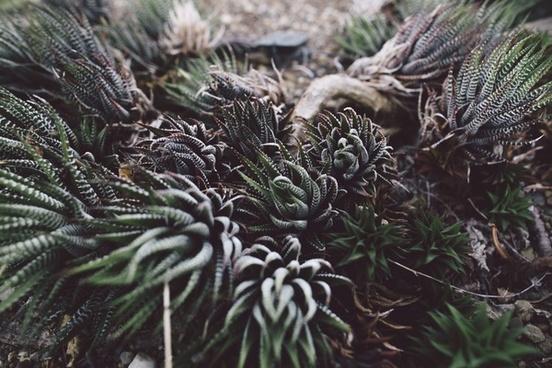 background cactus close closeup color coniferous