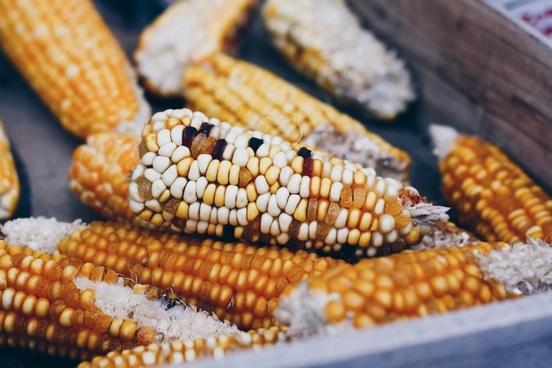 background closeup cob color corn corncob decoration