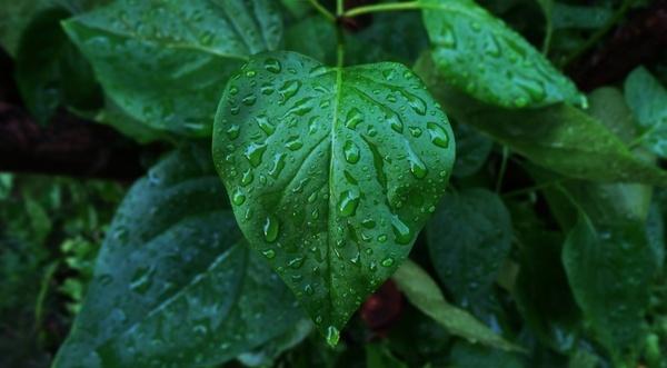 background closeup color dew drop food freshness