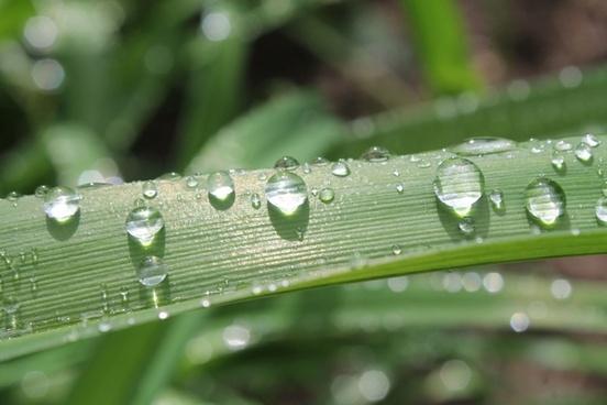 background closeup detail dew drop ecology