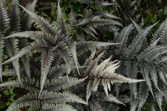 background daytime detail exotic fern garden growth