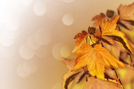 Autumn Free Stock Photos Download 3 764 Free Stock Photos For Commercial Use Format Hd High Resolution Jpg Images