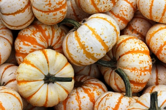 background pumpkins 2
