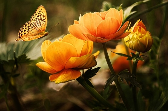 background with flower and butterfly