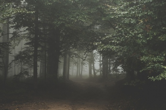 backlit branch eerie environment fog forest