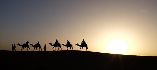 backlit camel desert dusk evening landscape morning