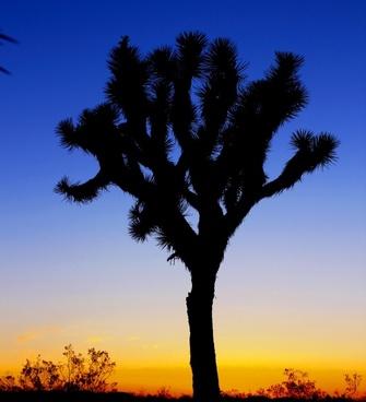 backlit contrast dawn dusk evening landscape light