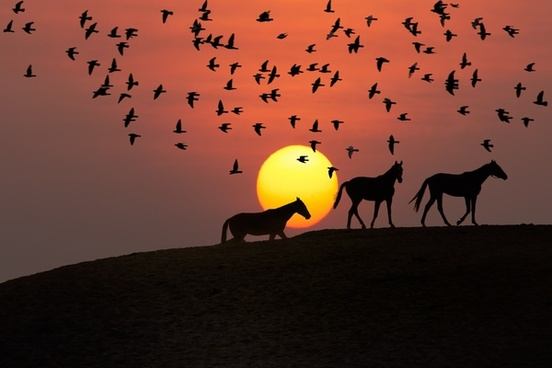 backlit desert dusk eerie evening evil flock