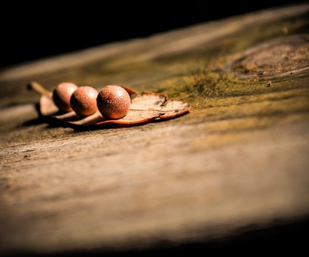 ball close up leaf nature seed sphere wood
