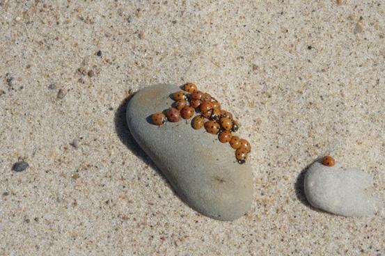 baltic sea beach sand