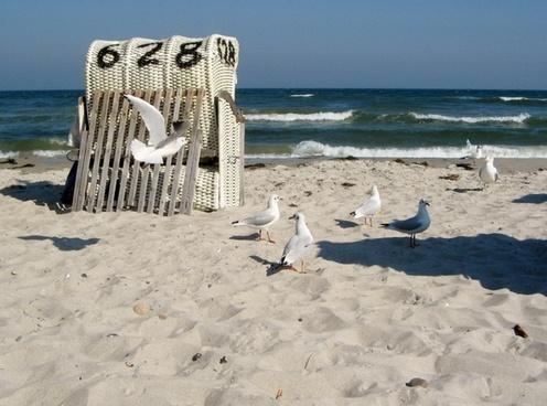 baltic sea gulls coast