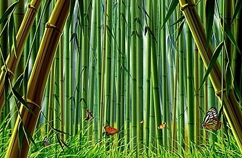 bamboo and butterfly psd layered