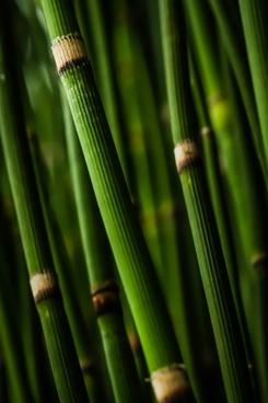 bamboo blur daytime drop environment forest garden
