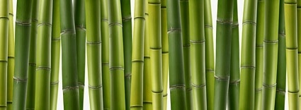 bamboo closeup picture