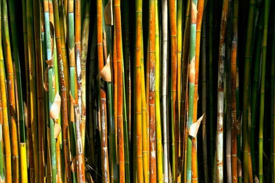 bamboo plant grass