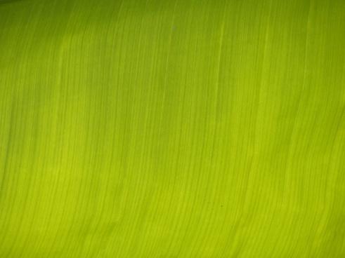 banana leaf journal green