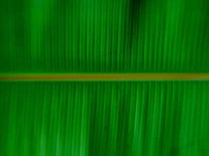 banana leaf quality picture