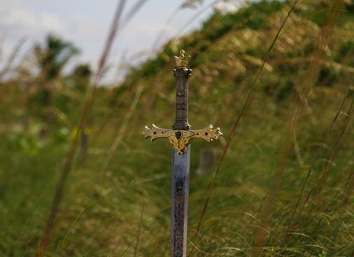 barbed wire bird bird of prey daytime dragonfly fence