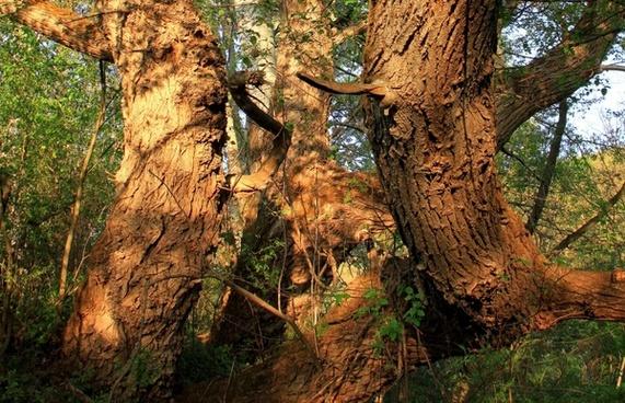 bark closeup moss