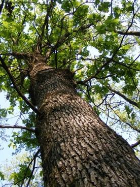 bark forest green