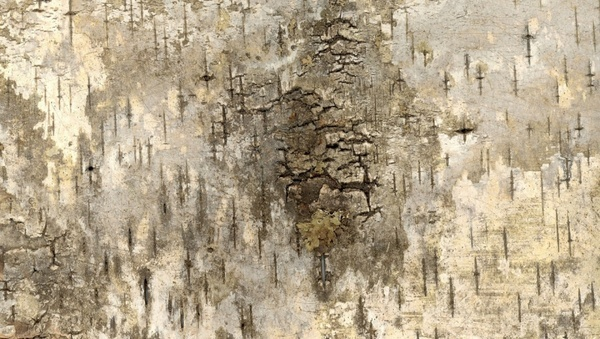 bark grunge texture background