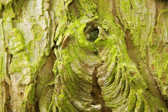 bark layer tree