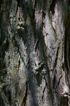 bark log robinia