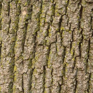 bark moss macro