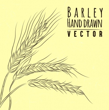barley background handdrawn sketch