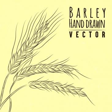 barley background handdrawn sketch