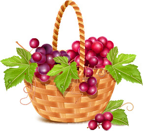 basket and grapes design vector