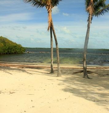 beach and trees at key largo florida